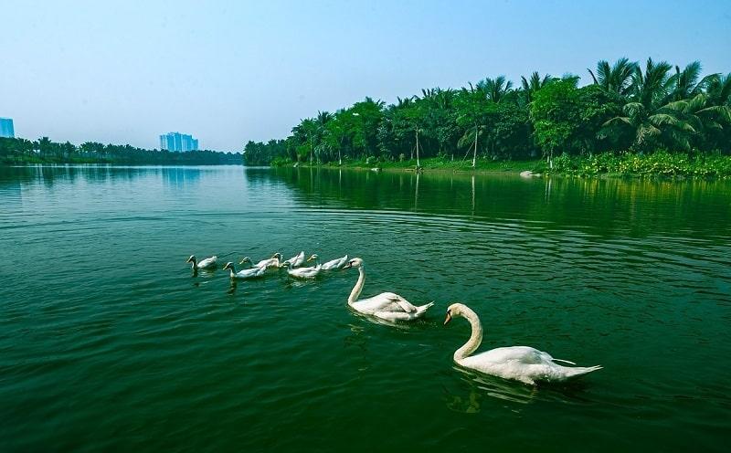 Cắm trại tại công viên Hồ Thiên Nga