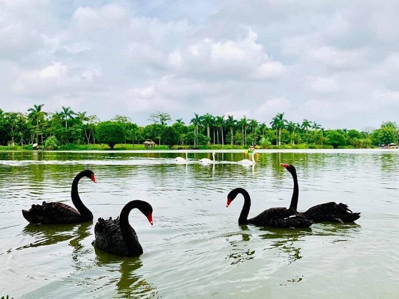 Công viên hồ thiên nga