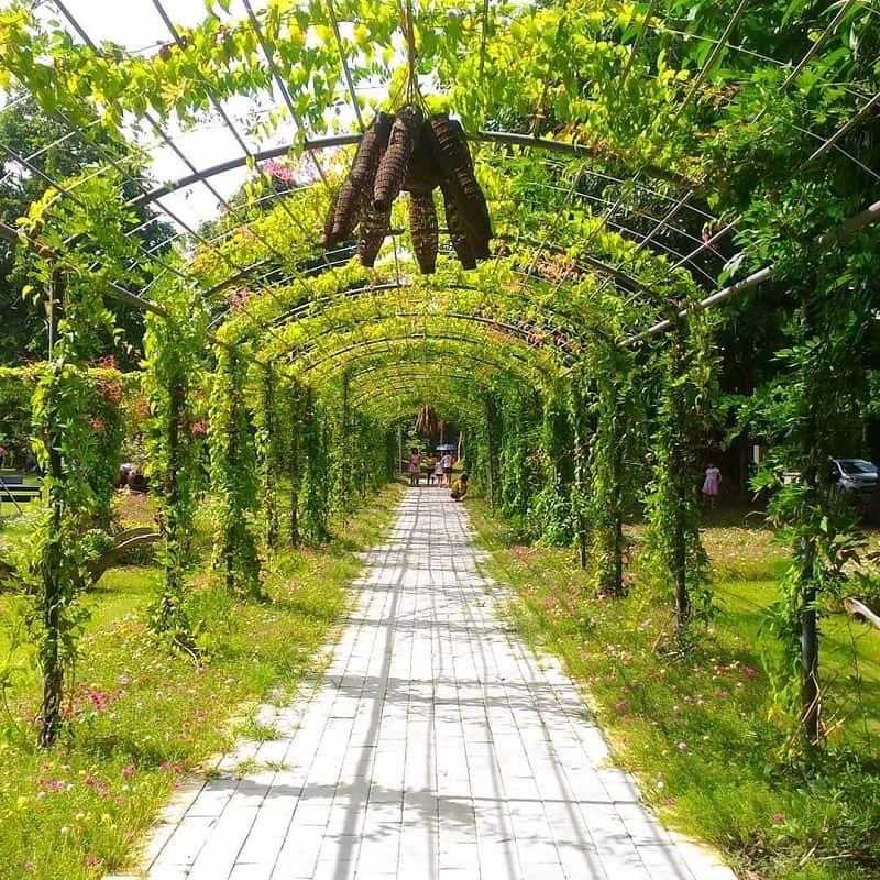 Đường dàn hoa tại công viên mua hạ Ecopark