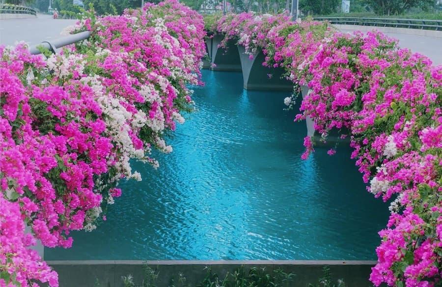 Cây cầu Bắc Hưng Hải trải đầy hoa giấy 2 bên đường
