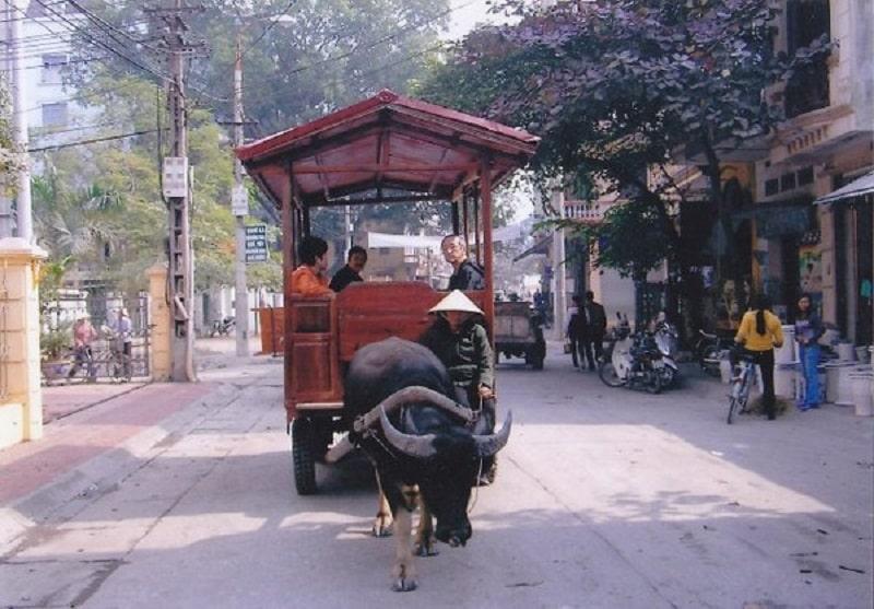 Thuê xe trâu tham quan ở Bát Tràng