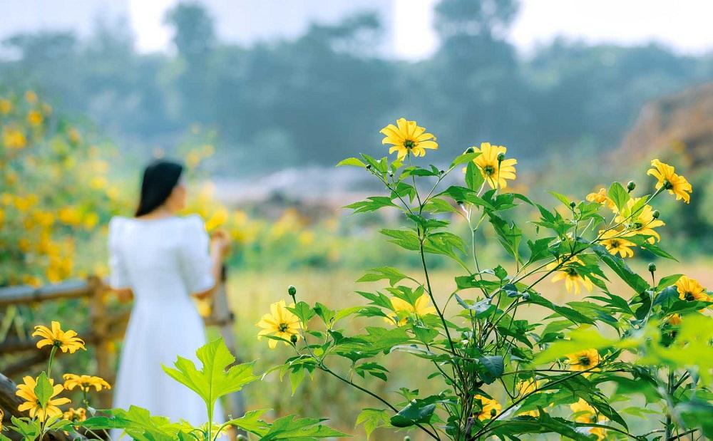 Ngắm trọn vẻ đẹp của Hoa Dã Quỳ tại Ecopark