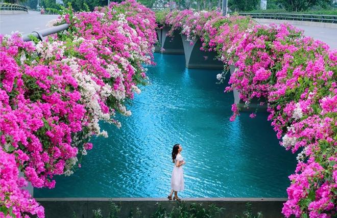 Hơn một triệu bông hồng nở hoa rực rỡ khắp Ecopark