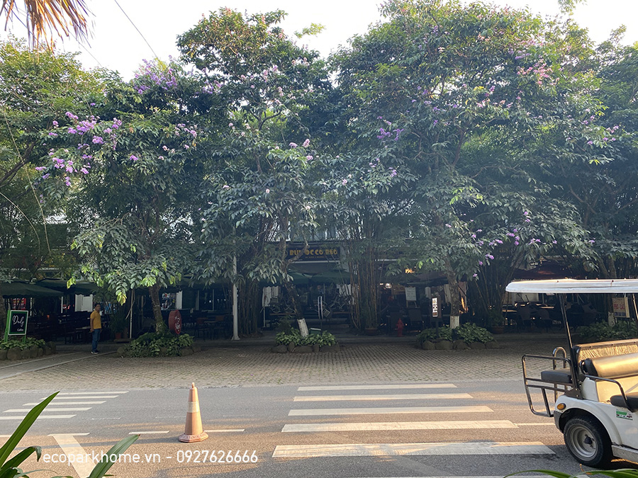 Nhà Phố Trúc Ecopark